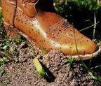 boot w:fire ants