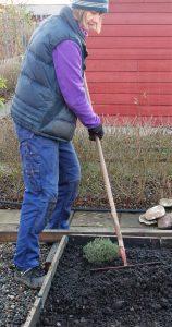 f Förbereda mark för odling - jag krattar ut kompostmylla.