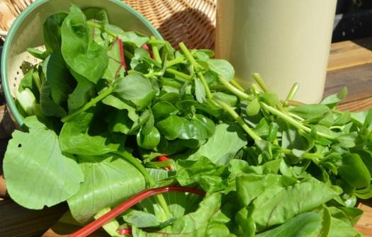 Paj med gröna blad