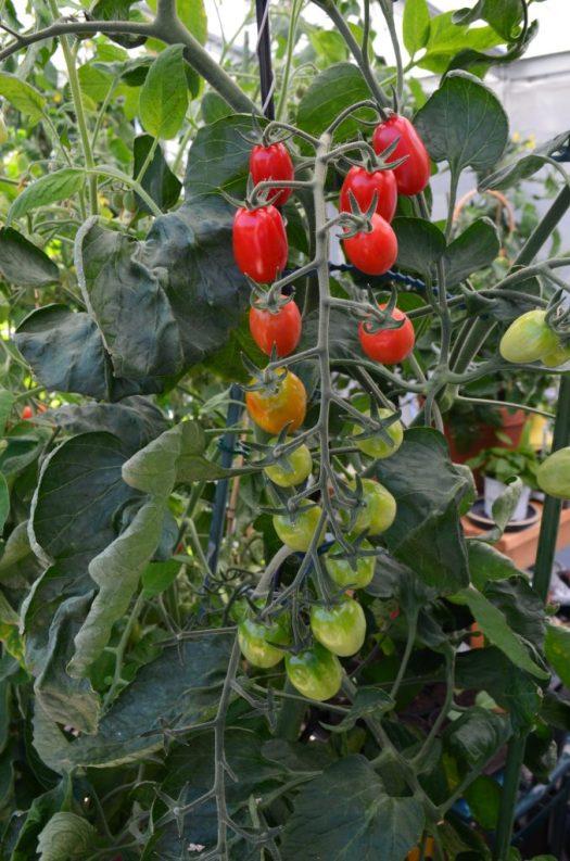 Favoriter att odla i sommar