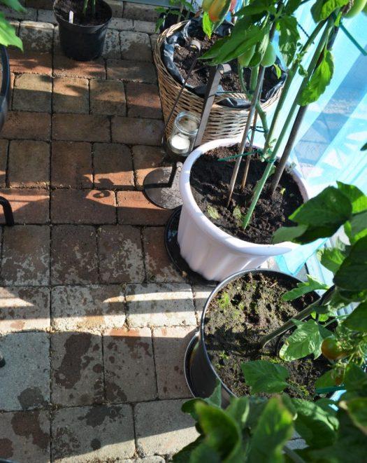 temperatur i växthuset