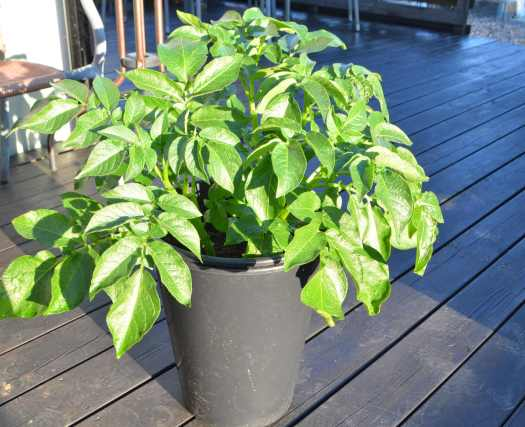 Överblivna småplantor