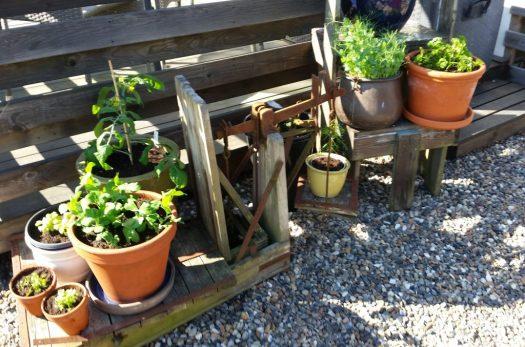 köksträdgård utan trädgård