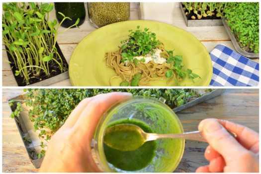 Gröna skott i maten
