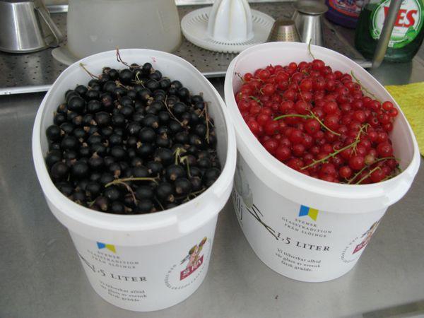 svarta vinbär, röda vinbär