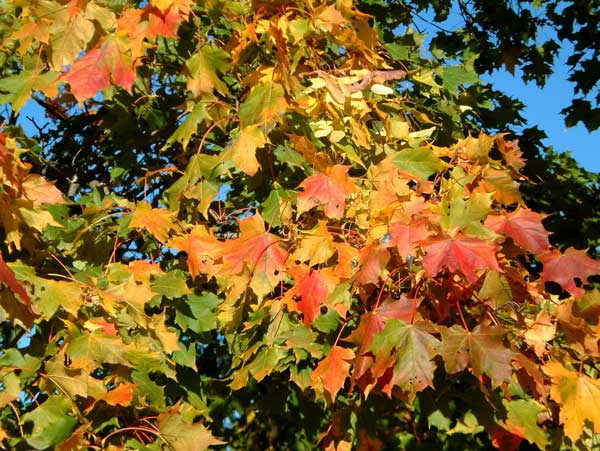 höst, autumn