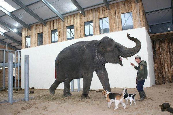 Elephant bath video  Skanda Vale