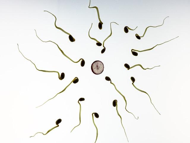 samenzellen um eine eizelle herrum