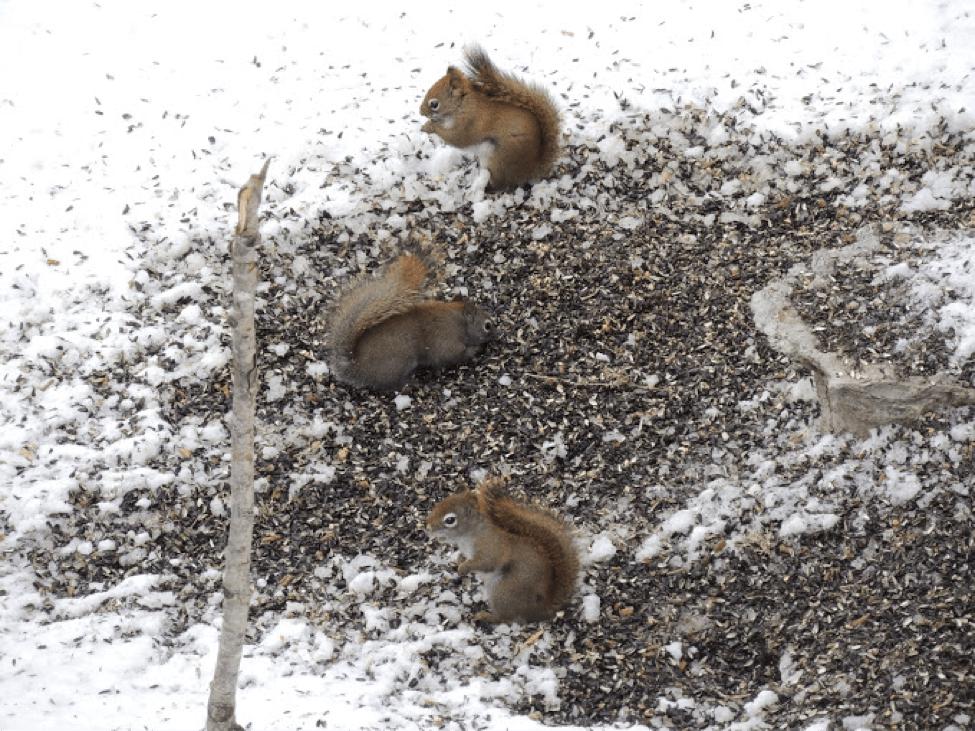 How To Repair Squirrel Damage Skedaddle Humane Wildlife Control