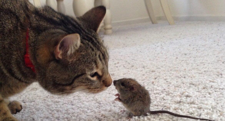 Mice Removal Milwaukee