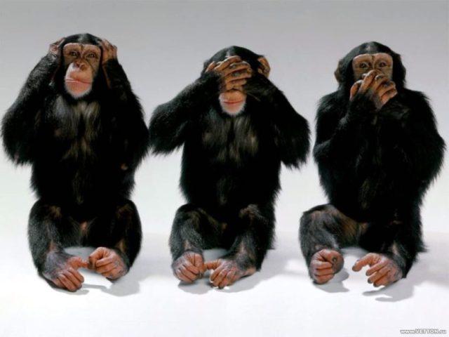 hcb-3-monkeys