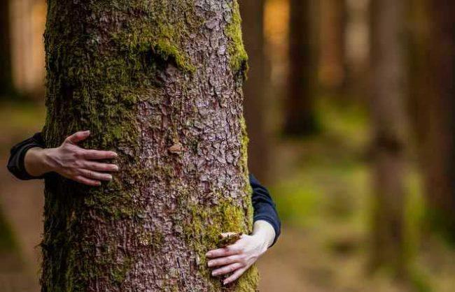 environmental belief
