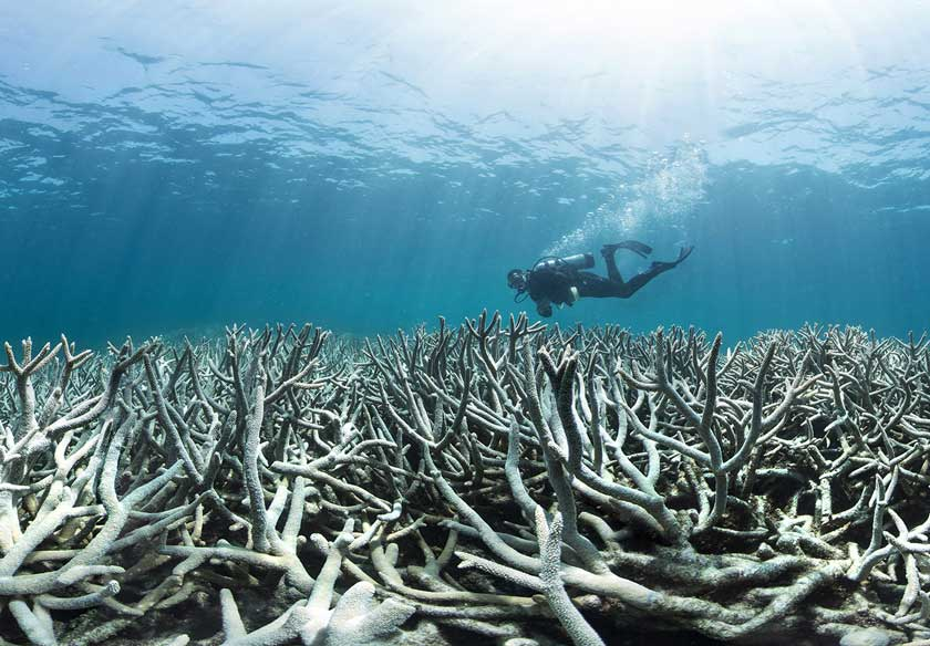 Study: #GreatBarrierReef at 'unprecedented' risk of collapse after major bleaching event