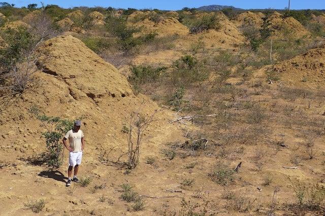 termite mounds