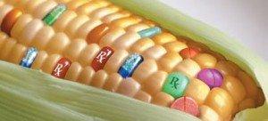 gmo-corn-rx
