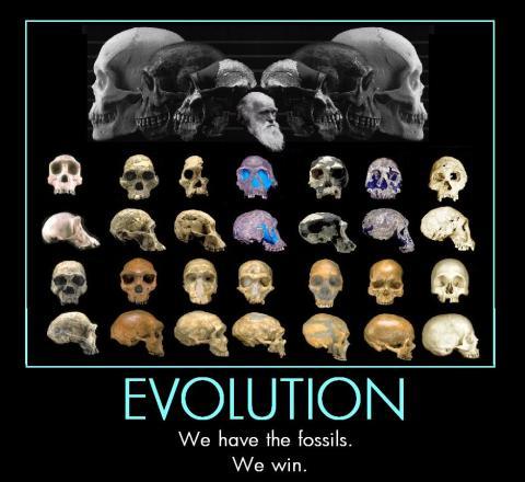 We have fossils. Evolution wins.