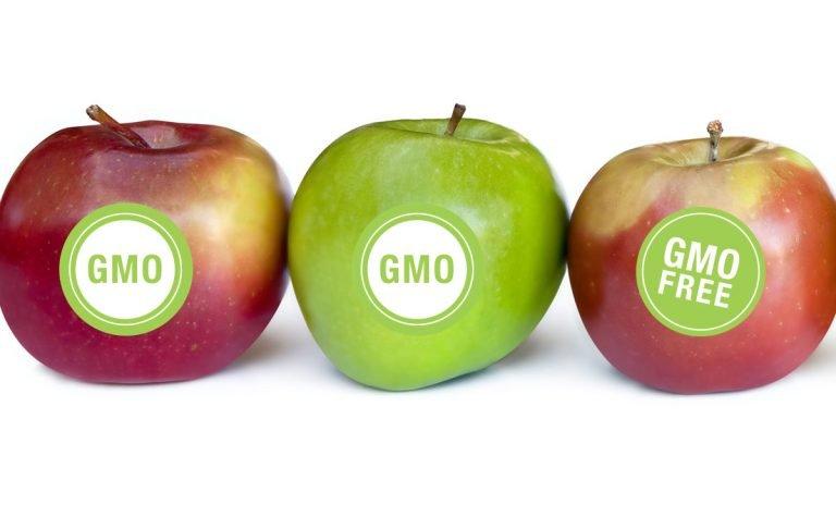 GMO vs non-GMO foods – genetic modification techniques