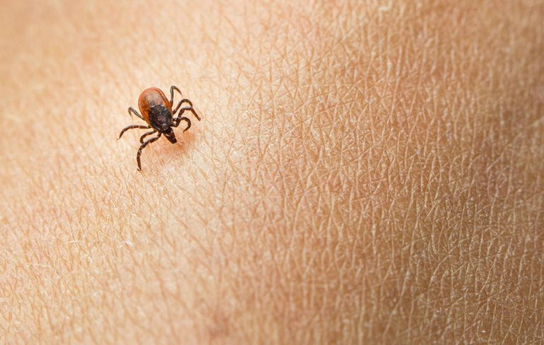 Chronic Lyme disease treatments