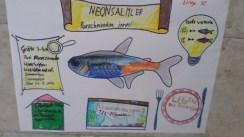 Sketchnote Hausaufgabe Fischart