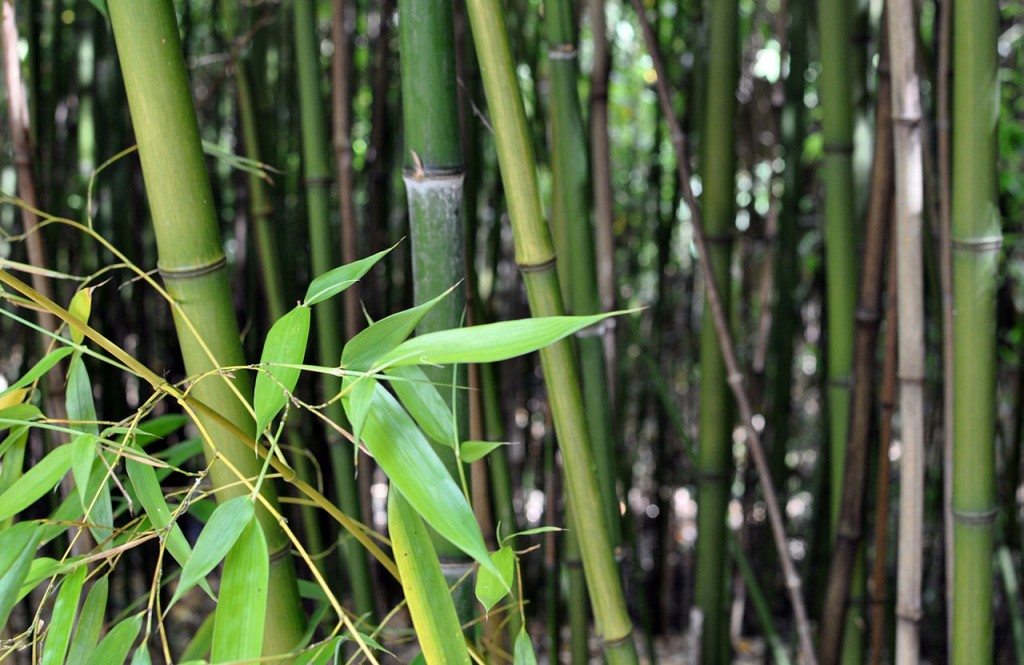 Bamboo 3D model for SketchUp