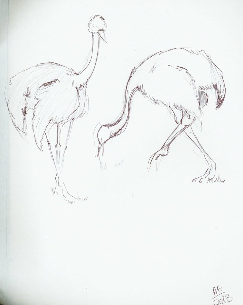 Ostrich Studies 2
