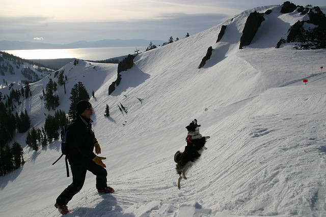 Alpine Meadows Rescue Dog Team in action