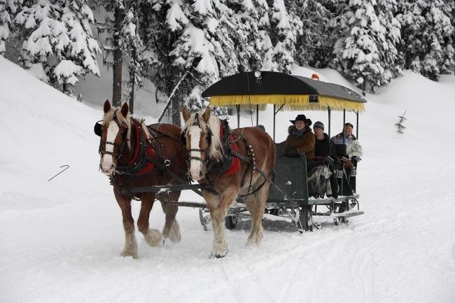 Silver Star horse-drawn sleigh ride