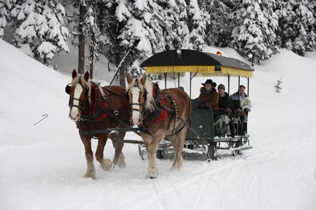 Silver Star horse-drawn sleigh ride