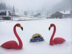 September Snow Sunshine Village