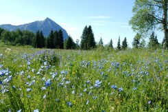 Crested Butte wildflower festival 2015