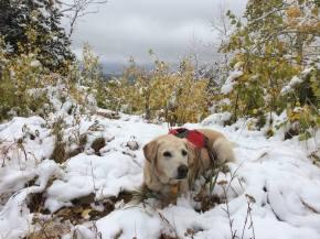 Patrol dog Zeke getting back to work at Park City Mountain Resort   Photo: Andy VanHouten, Park City Mountain Resort