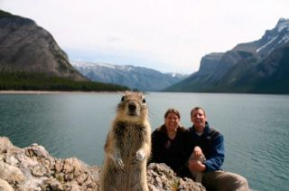 Banff Crasher Squirrel, Crasher Squirrel, Banff Squirrel