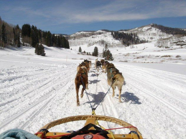 krabloonik dog sledding