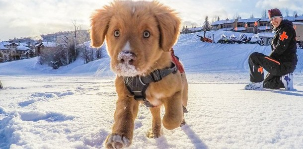 dog friendly lodging aspen