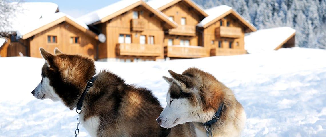 things to do in meribel - husky riding