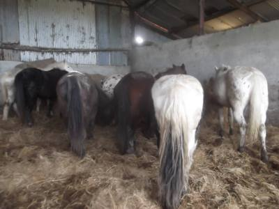 Skibbereen-Animal-Sanctuary-and-Rescue-Centre (12)