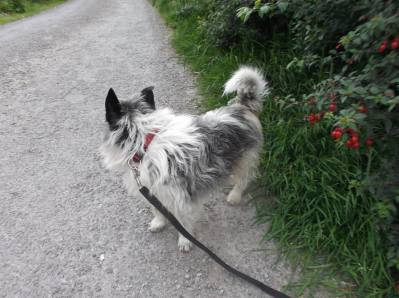 Skibbereen-Animal-Sanctuary-and-Rescue-Centre (141)