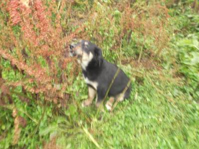 Skibbereen-Animal-Sanctuary-and-Rescue-Centre (164)