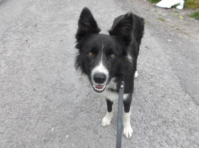 Skibbereen-Animal-Sanctuary-and-Rescue-Centre (184)