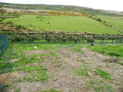 Skibbereen-Animal-Sanctuary-and-Rescue-Centre (238)