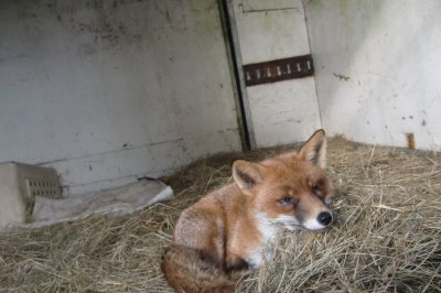 Skibbereen-Animal-Sanctuary-and-Rescue-Centre (286)