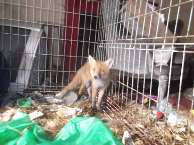 Skibbereen-Animal-Sanctuary-and-Rescue-Centre (35)