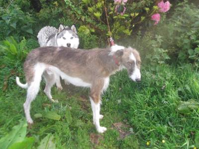 Skibbereen-Animal-Sanctuary-and-Rescue-Centre (7)