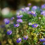 kwiatki_05