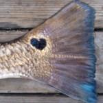 Texas loves their Redfish!