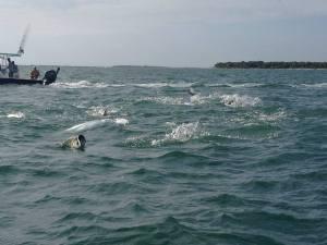 Epic Tarpon Fishing off Captiva, Florida