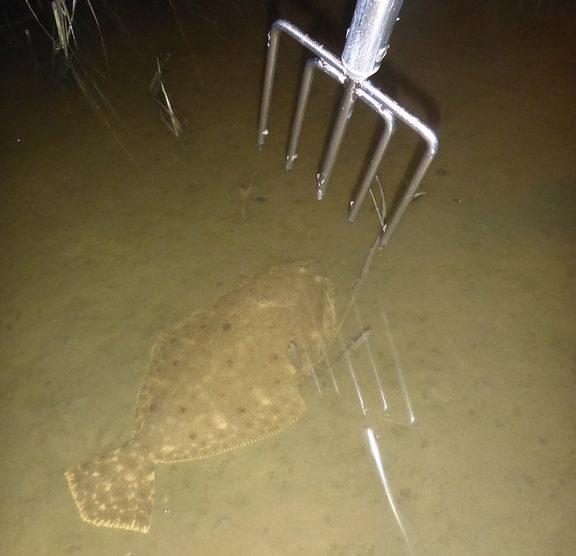 flounder gigging