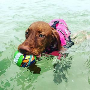 The skiff pup