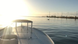 Chasing dolphins and a nice sunrise