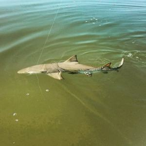 Tax man was following the boat so we casted at him!              …